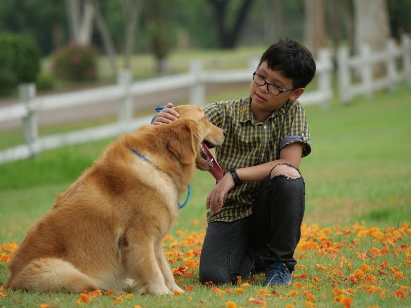 הכיתה התקשורתית- אילוף כלבים
